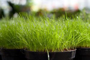 1158273_grass